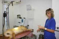 Харьковский ветеринарный госпиталь  Харьков