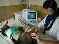 Участковая лечебница ветеринарной медицины №4  Харьков