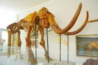 Палеонтологический музей  Санкт-Петербург