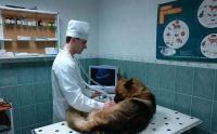 Ветеринарная клиника Центр  Москва