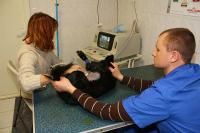 Центр Ветеринарной Медицины Донецк