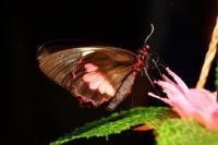 Парк бабочек   Новосибирск