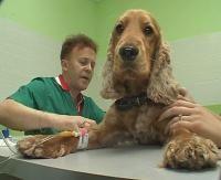Скорая ветеринарная помощь  Ростов-на-Дону