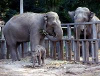 Одесский зоопарк  Одесса