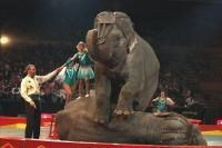 Одесский государственный цирк  Одесса