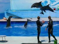 Дельфинарий в Казачьей бухте Севастополь