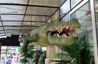 Крокодиляриум  Ялта