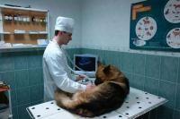 Ветеринарный кабинет №1  Екатеринбург