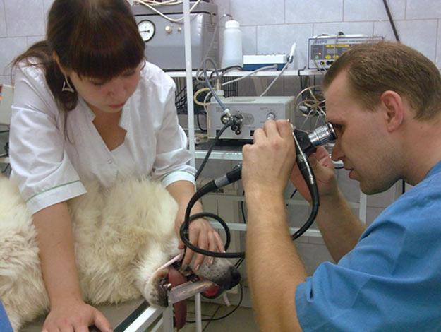 ветеринарный центр доктор томас анапа
