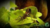 Сад бабочек Чудо на ладони